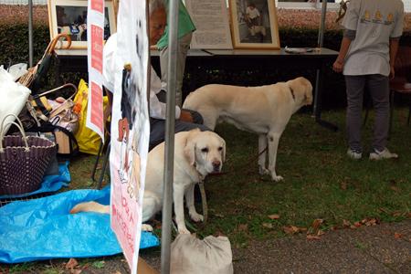 働く犬を支援する会 SFC支部