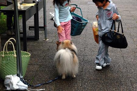 犬と戯れる子供達