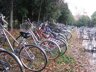 ずらっと自転車
