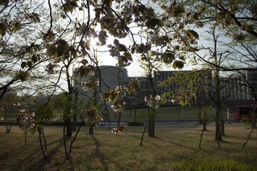桜の間からSFC