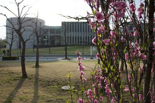 ピンクの花も綺麗です