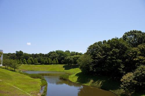 広い空と鴨池