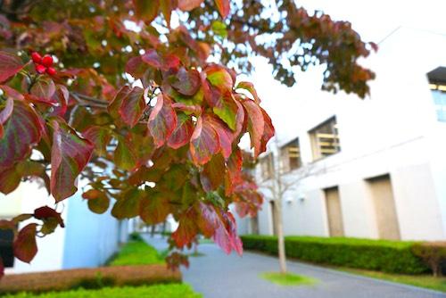 大学は24日(木)からスタート
