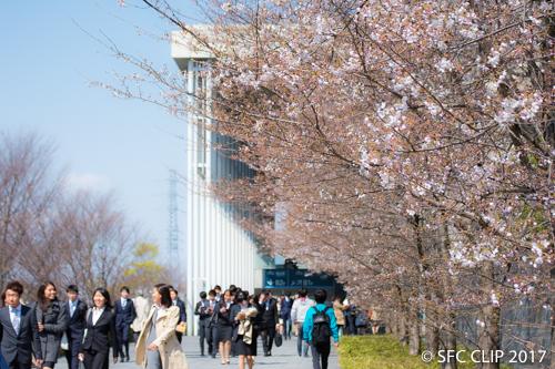日吉キャンパスの桜も新入生たちを迎えた